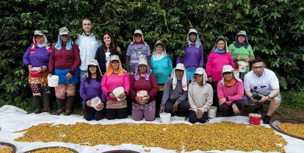 Kávovníková farma v Brazílii